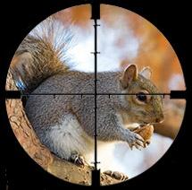Squirrelincrosshairs1